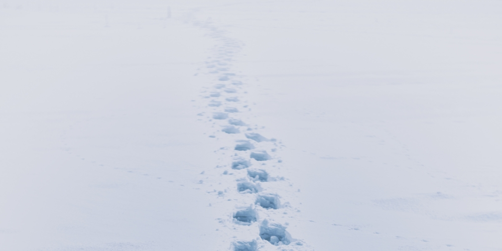 kroki na śniegu