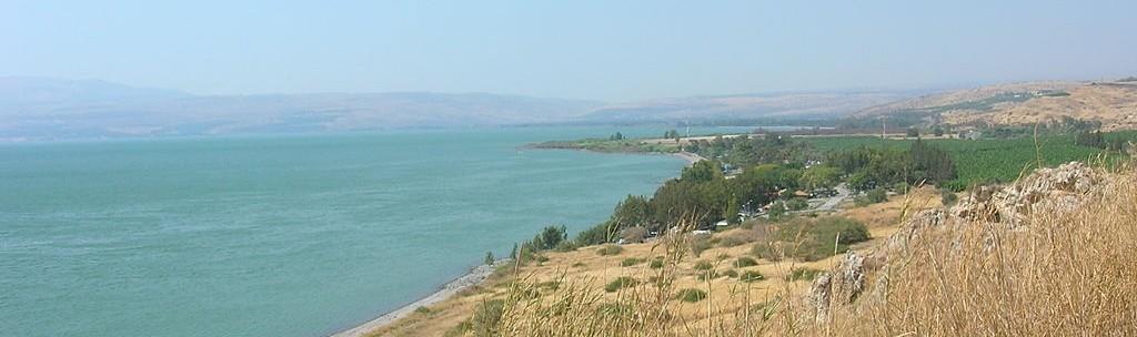 trawa nad Jeziorem Tyberiadzkim, EdoM@cmmons.wikimedia.com, CC-BY-SA