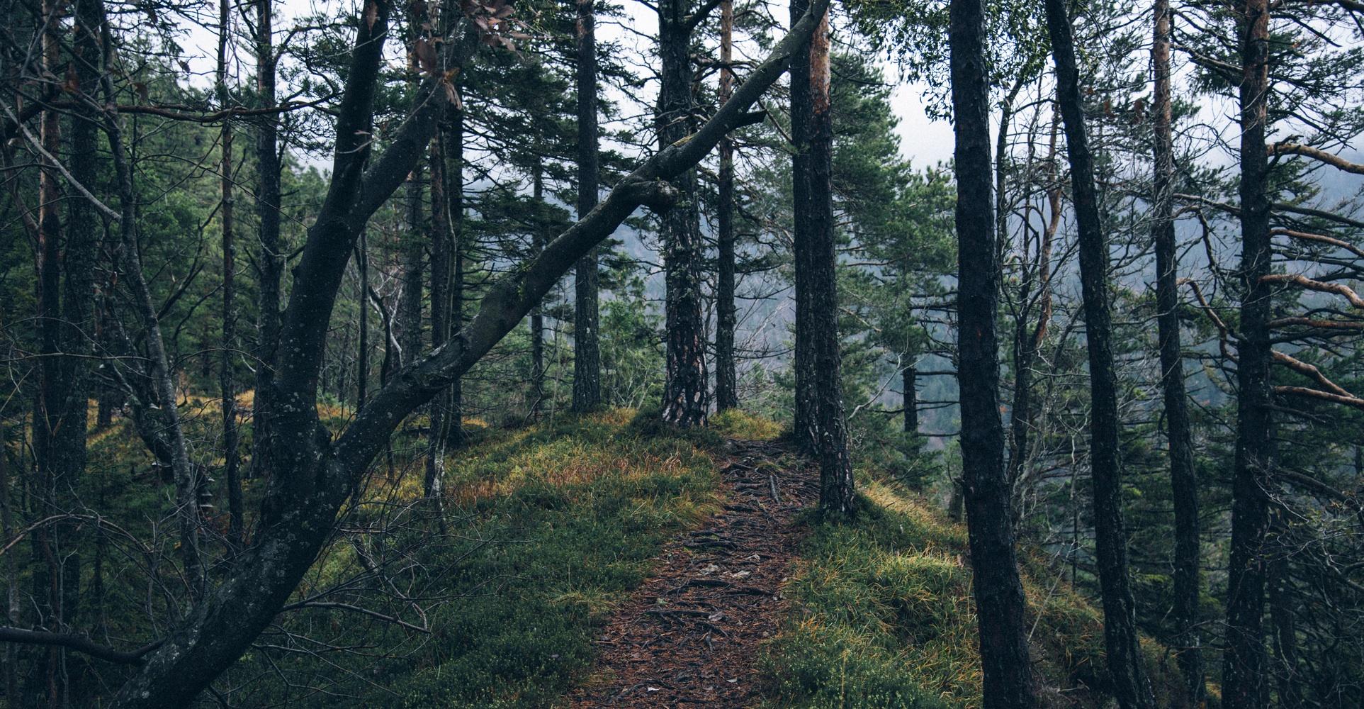 ścieżka w lesie, zdjęcie: unsplash.com, CC-0