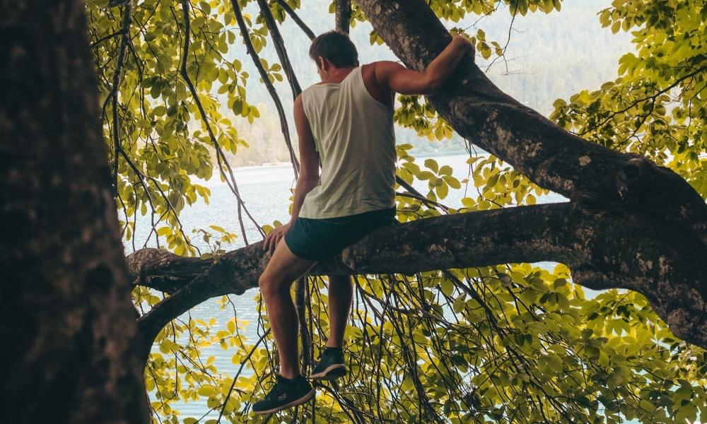 na drzewie, zdjęcie: cristina-gottardi-unsplash CC-0