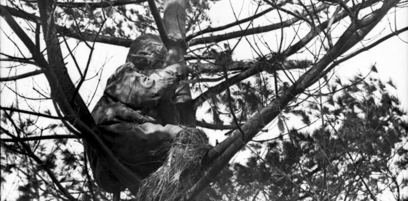 Zacheuszu, zejdź z drzewa!