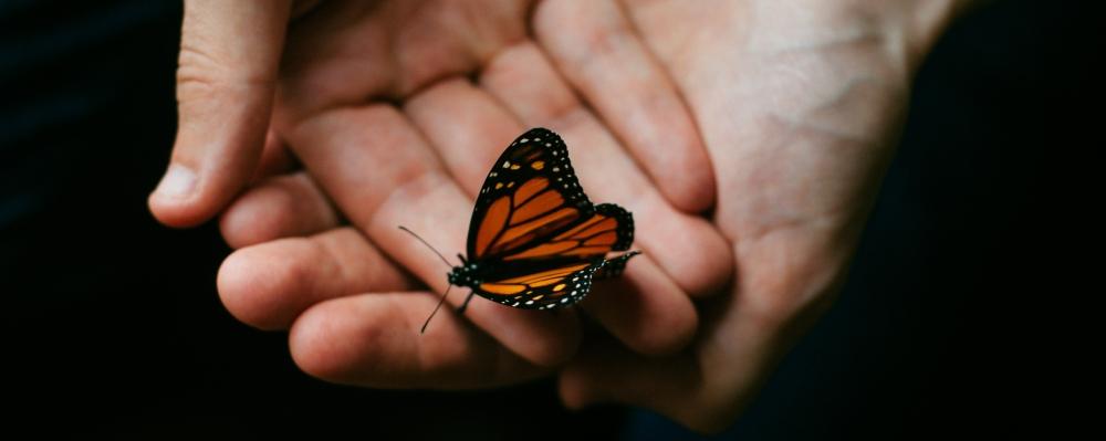 błogosławiąc, Bóg wykorzystuje efekt motyla, zdjęcie: MathiasReed@unsplash.com, CC-0