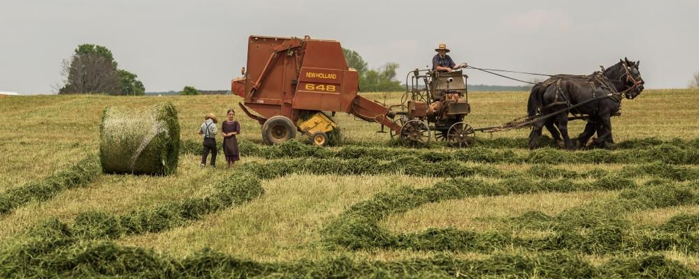 rolnik szuka żony, zdjęcie: vladimir-kudinov@unsplash.com CC-0