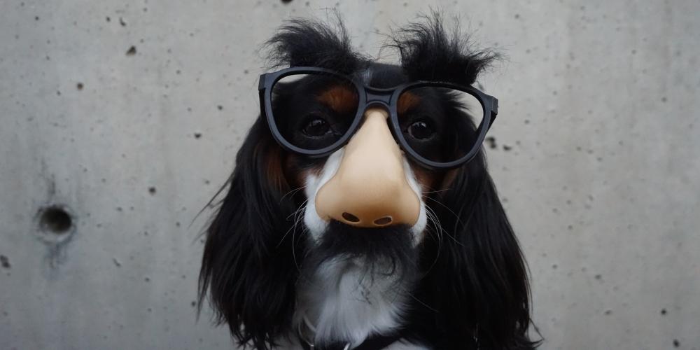 pies w okularach, który dziwnie wygląda