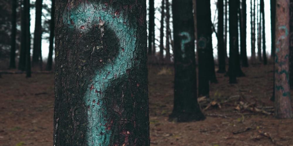 kto to jest? zdjęcie: evan-dennis-unsplash CC-0